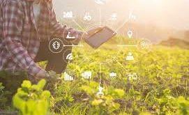 کشاورزی دیجیتال، نقطه امید برای تامین غذای آینده