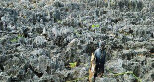 معرفی منطقه آزاد کیمن؛ جزایری در دریای کارائیب