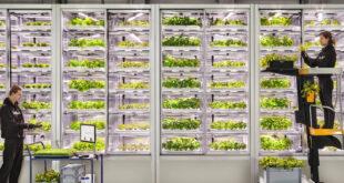 استفاده از هوش مصنوعی، کشاورزی عمودی را متحول میکند
