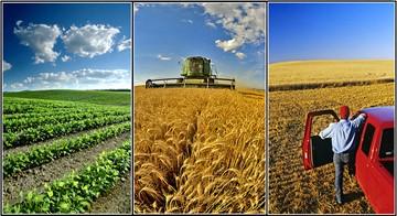 اینترنت اشیا به کشاورزی راه مییابد
